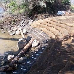 Wanapum Shoreline Stabilization - new plantings