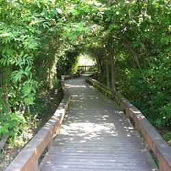 Waterhouse Trail - boardwalk