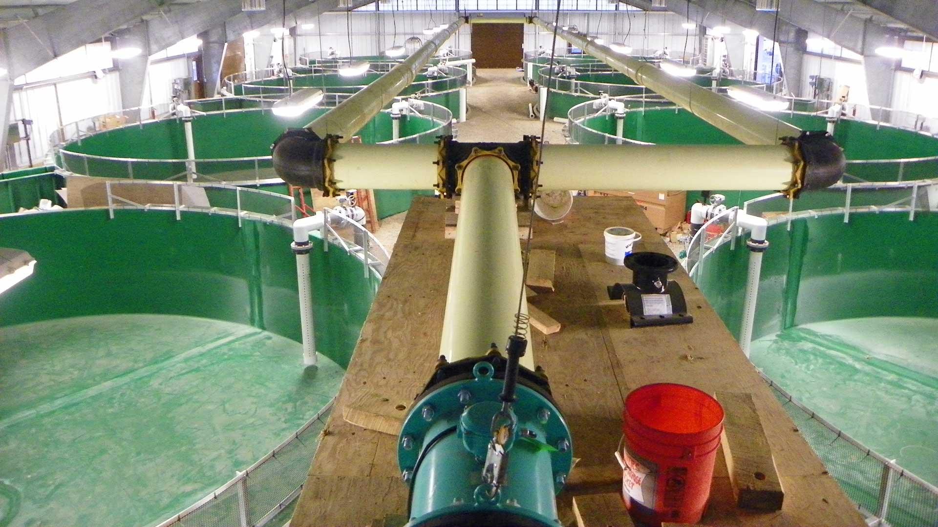 Carlton Acclimation Facility - rearing tanks