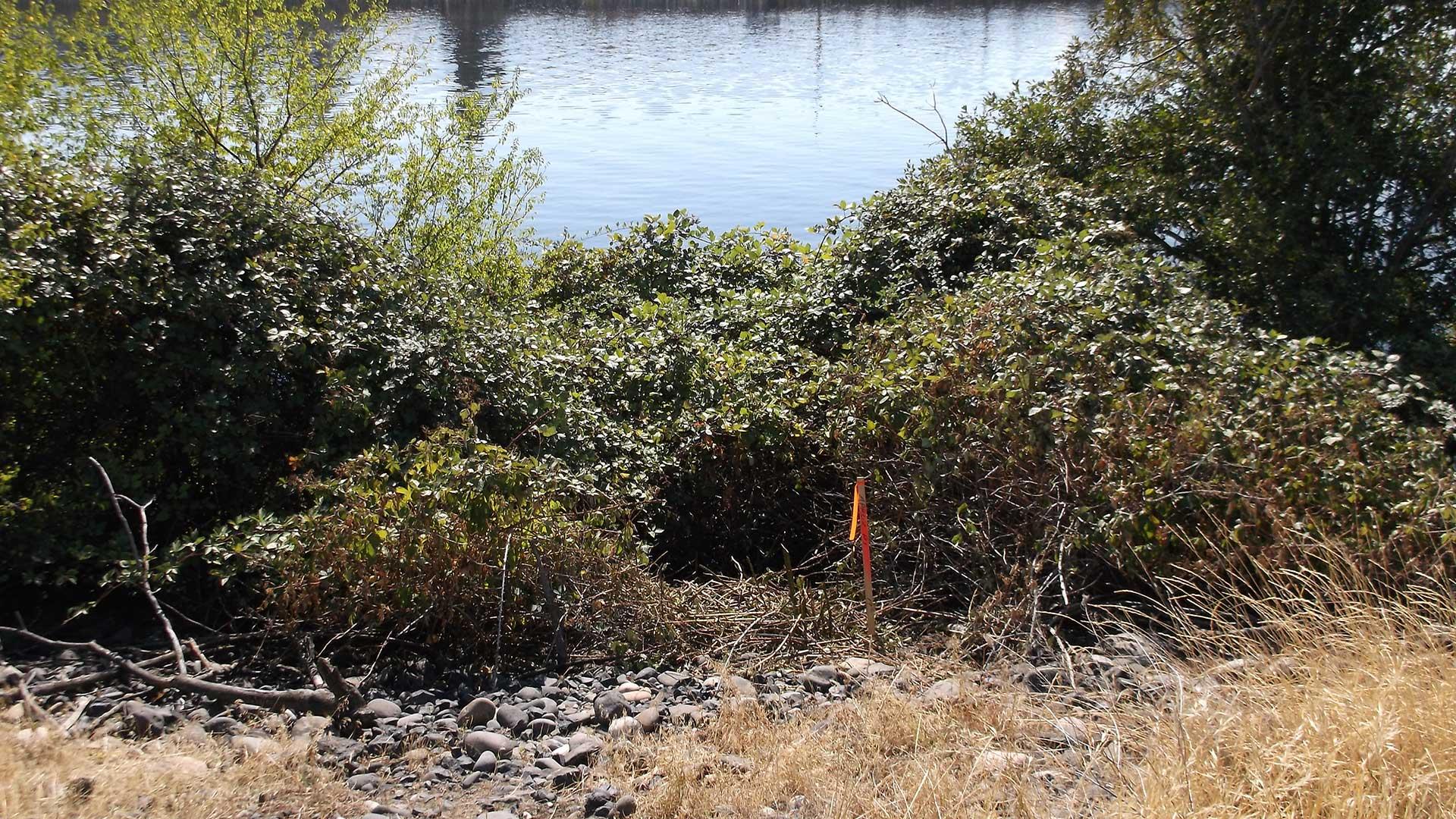 Williams River Profiles - survey
