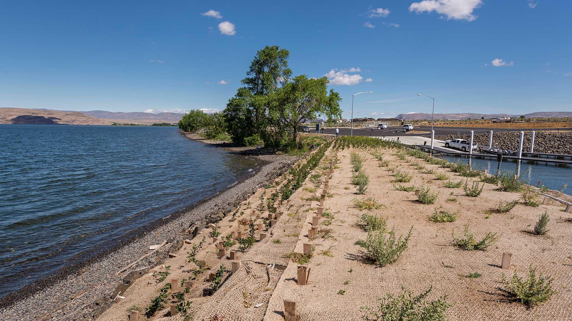 Priest Rapids Shoreline Stabilization - new plantings