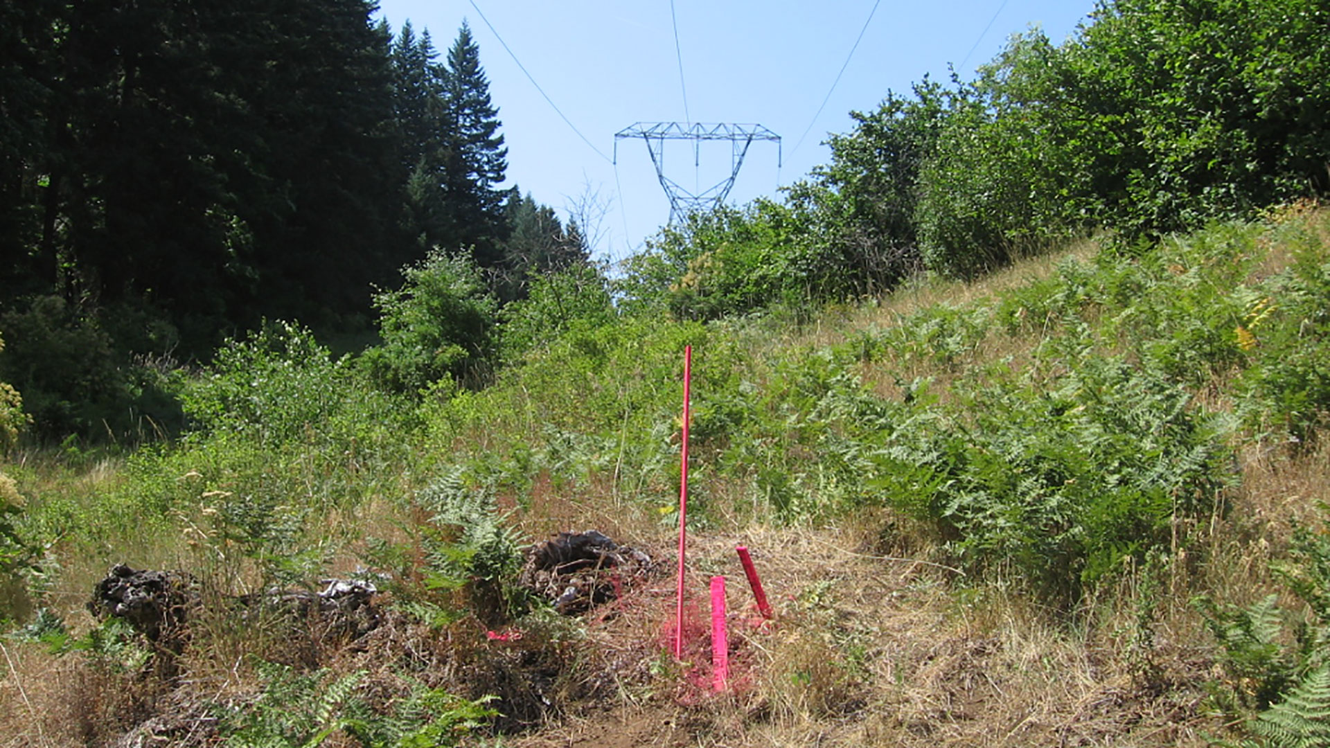 Ross-Schultz Fiber Optic - survey