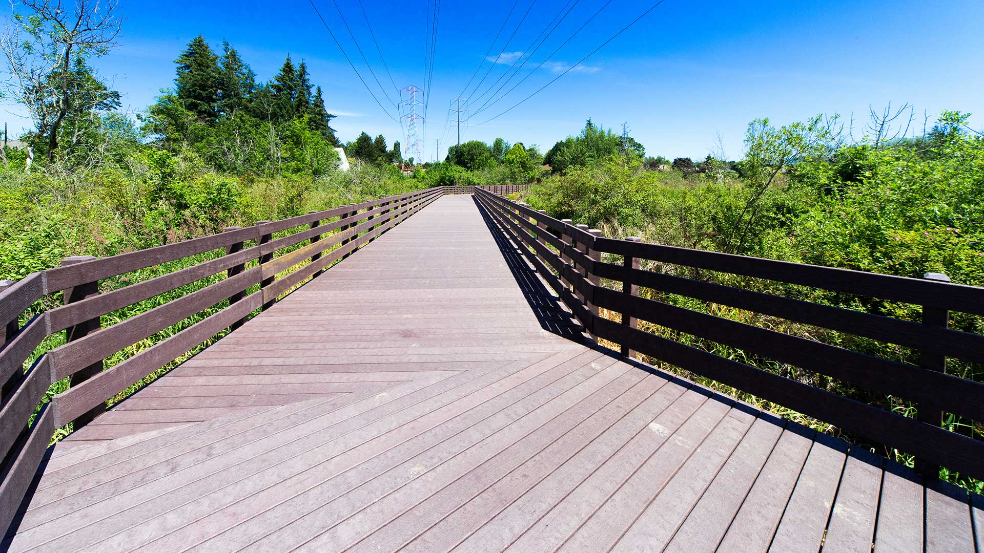 Waterhouse Trail - boardwalk